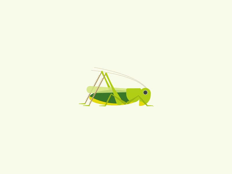 Wart-biter bush cricket geometric simple minimal vector nature conservation childrens illustration wildlife endangered insect cricket