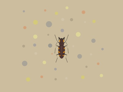 Heath tiger beetle vector insect beetle conservation wildlife endangered