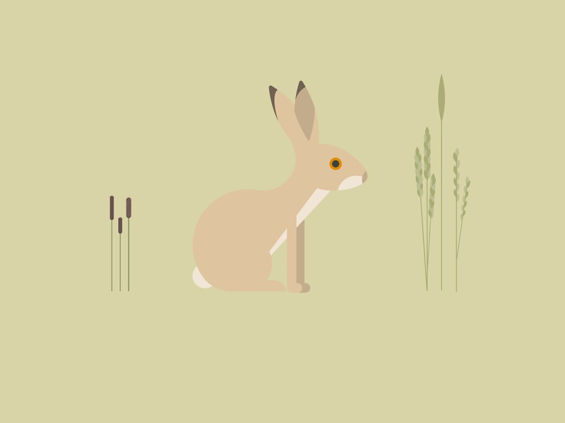 Brown Hare minimal vector conservation childrens illustration kids illustration hare endangered nature wildlife