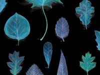 Leaf Grid Inverse
