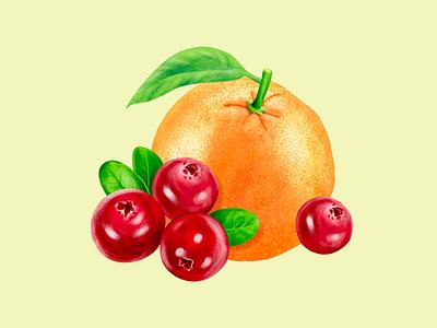 Fruit Illustration brushes drink fruit label packaging illustration beverage leaves lemonade cranberries orange
