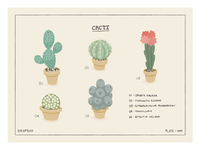 Cacti illustration icon vector plants cacti hand-drawn nature pointy