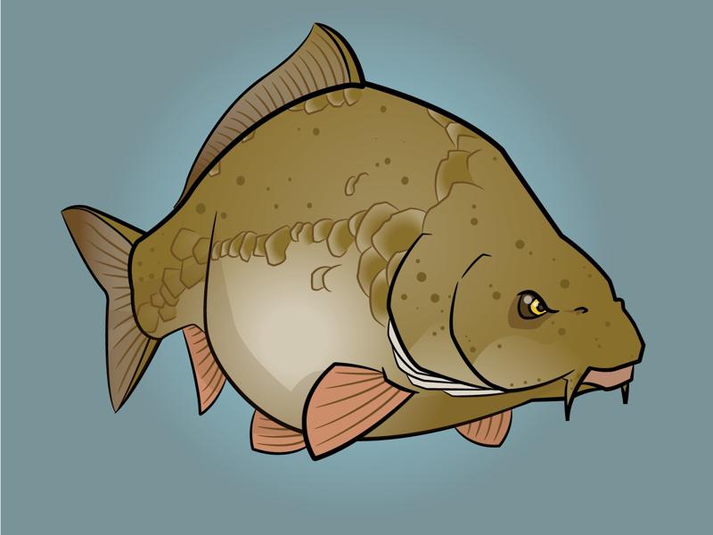 Red River Carp fishing fish carp illustration
