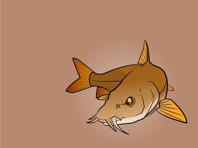 Red River Barbel