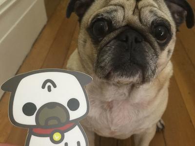 Leica the Pug Sticker IRL pug vector sticker