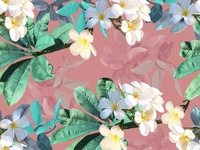Plumeria tropical flower Seamless pattern