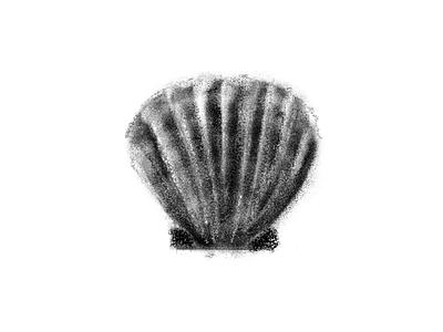 Shell study photoshop illustration
