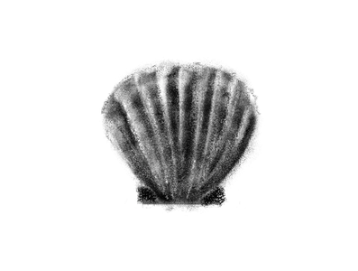 Shell study photoshop illustration