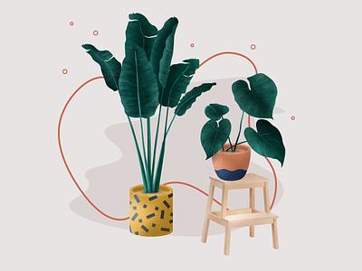 "Illustration Indoor plants for ""Дарьин Сад"" plants drawing illustration"