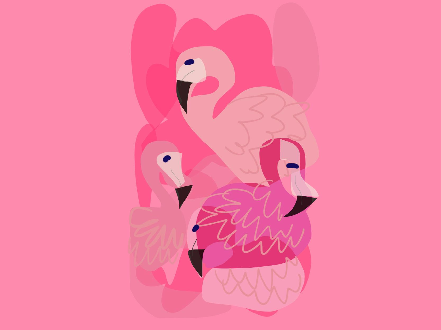 Flamingos dribbble 01