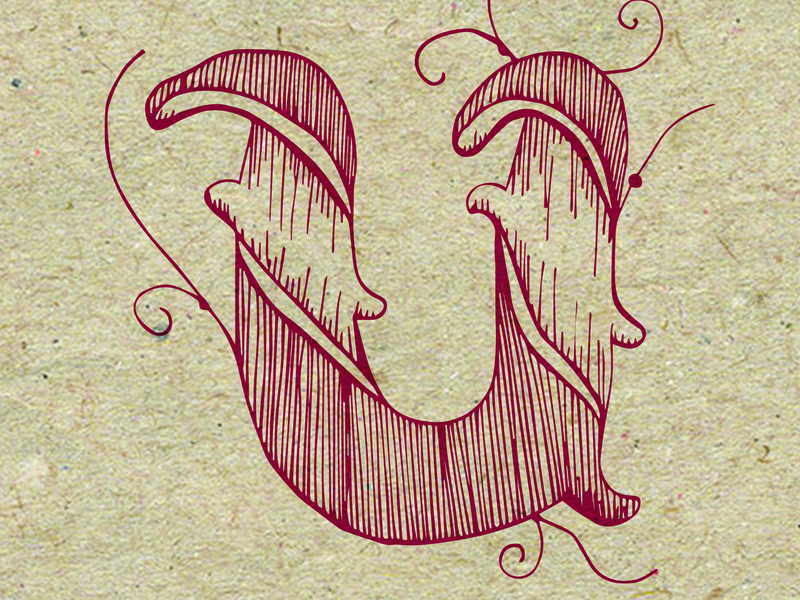 Letter U logo logo design 36 days of type logotype graphic design drawing typography illustration lettering