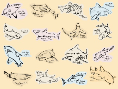 Shark Sketches patterns pattern sketches sketch illustrations illustration fish sea sharks