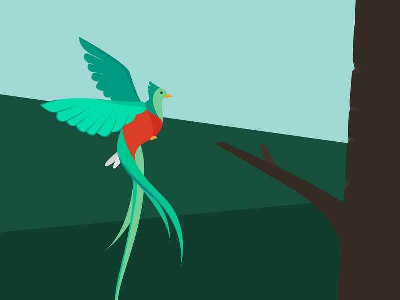 Quetzal (edit) flat design quetzal bird nature wildlife graphic design landscape illustration