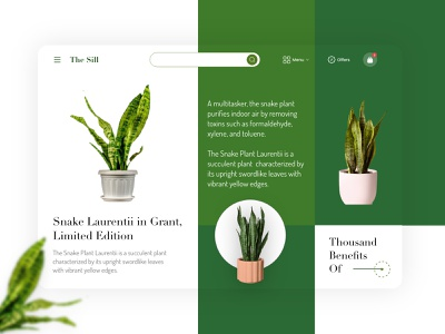 The skill - Snake Laurentii in Grant planet gogreen happy green snakeplant snake decor plant art minimal typography ui flat logo vector ux illustration branding design