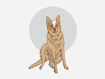 Pup Portrait adobe illustrator commission art illustrator art illustrator illustration