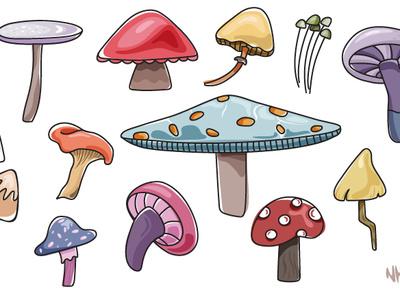 Mushrooms Illustration colorful vector foodillustration food mushrooms illustration doodles