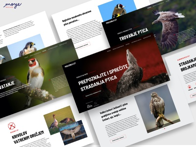 Poslednji let - The last flight ui design ui ux moye moyedesign danger website bird website birdslife birds