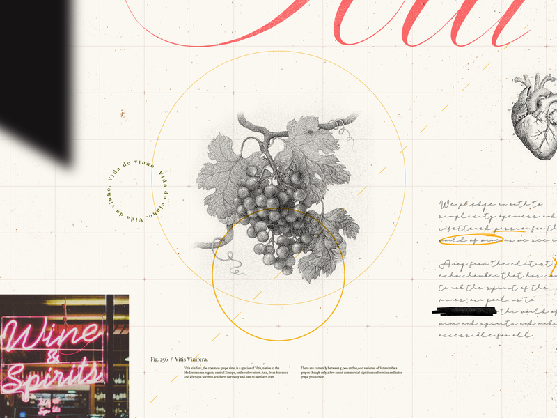 Vine.Ly | Wine Visuals wine composition collage illustration design art direction