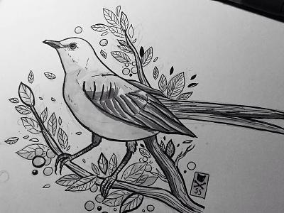 mockingbird ink sketch bird mockingbird