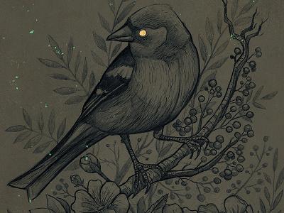 finch illustration nature gold finch bird