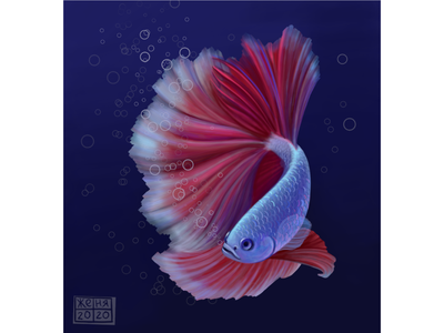 "Рыбка ""Петушок"" рыба аквариум море вода петушок"