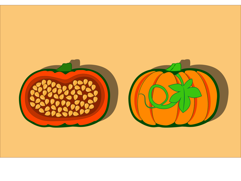 Тыква ботаника вектор иллюстрация плод растение овощ урожай семена тыква