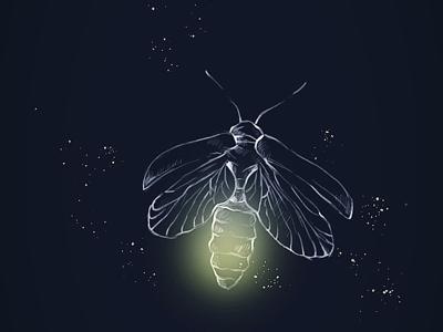 Firefly 🌻