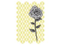 Single Rose - In Bloom