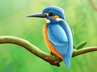 kingfisrher Bird painting illustrator illustration vector