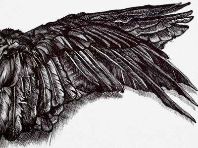 Wings of a raven hand drawn illustration print create blackandwhite intricate delicate fly bird crow feathers wings art drawing ink sketch pen ballpoint raven
