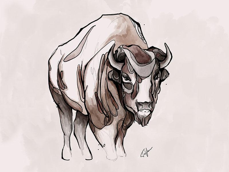 Buffalo texture ink drawing line art ink illustration illustration animal illustration hand drawn ink art watercolor procreate art ipad pro procreate buffalo