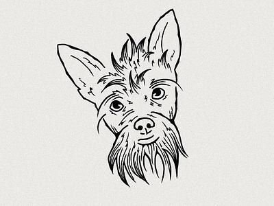 Sawyer Brown drawing illustration art ipadpro procreate puppy dog illustration illustration dog