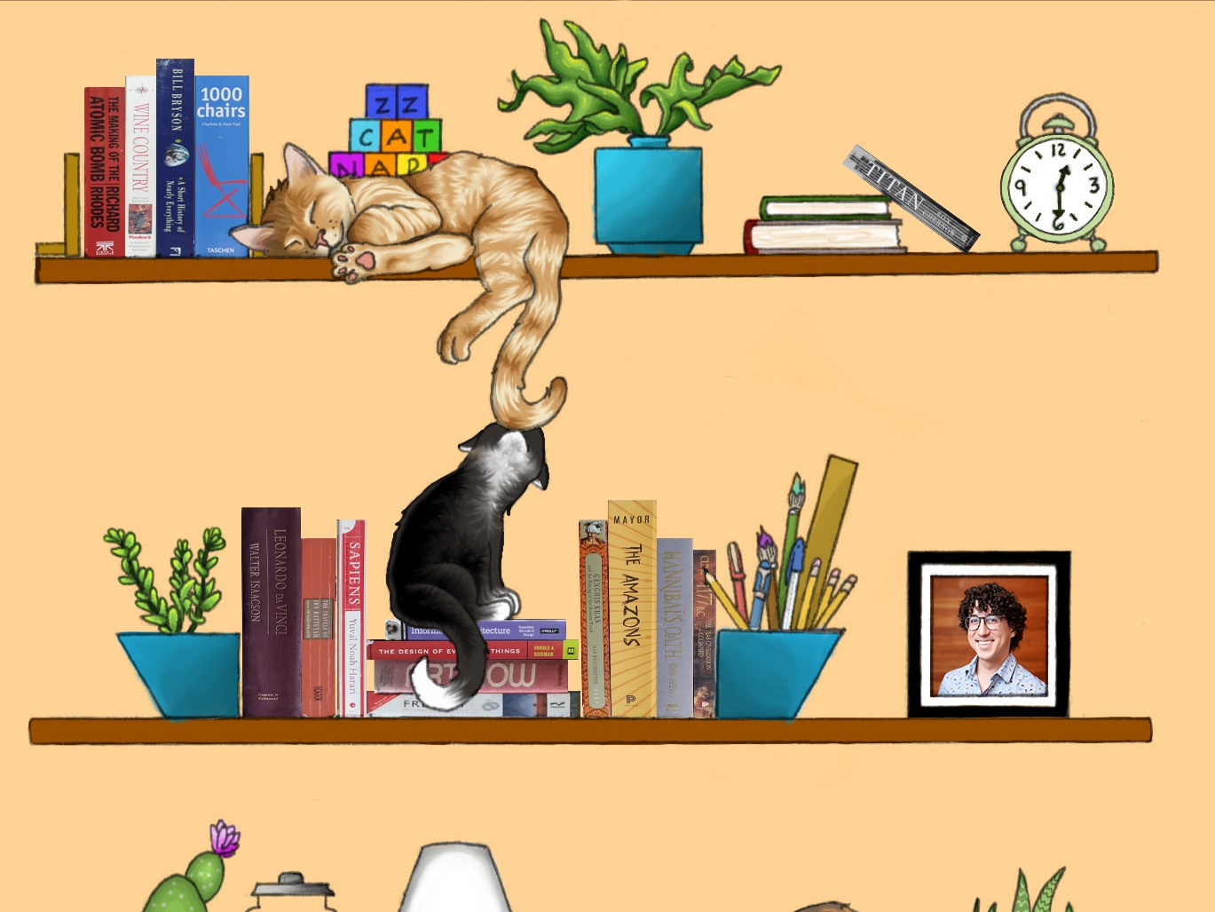 Cats On Shelves (1)