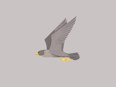Volkswagen Magazine design flat editorial art textures vector animals eagle editorial illustration illustration editorial