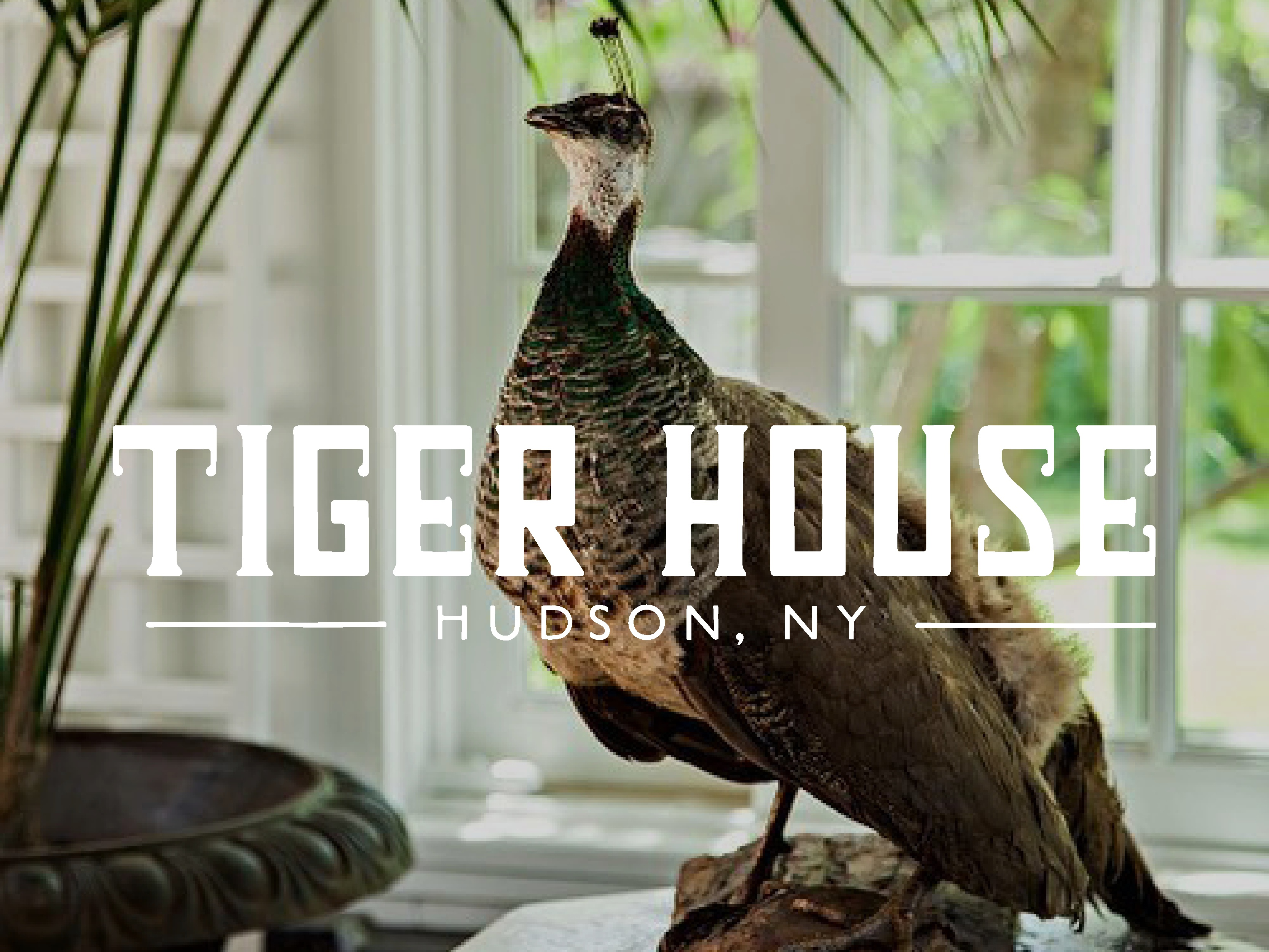 Square graphics   2019 tiger house4
