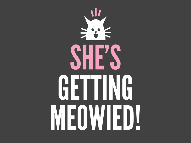 Shirt Design graphic design minimalist typography wedding married bachelorette cute cat shirt tshirt tshirt design shirt design