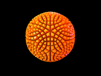 Dribbble Sphere (Shaved)