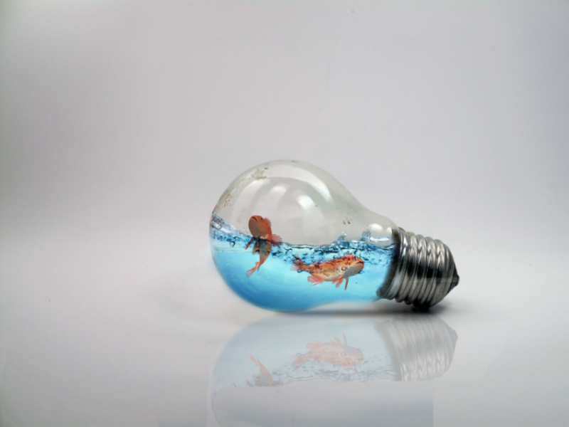 Fish in bulb photo manipulation. water. blue illustration create photoshop