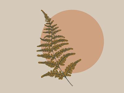 Fern illustration