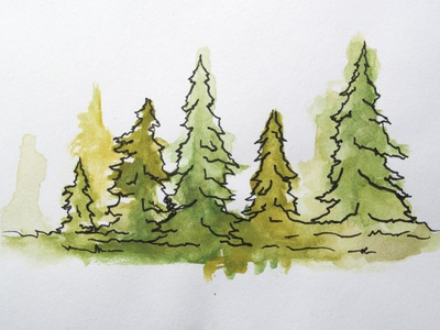 Evergreen Watercolor illustration trees evergreen watercolor