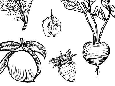 The Pickled Peach Cafe vegetables spinach leaf strawberry fennel beet peach design hand-drawn sketch drawing illustration