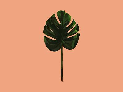 Botanical Illustration botanical palm frond tropical illustration foliage palm