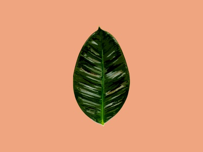 Botanical Illustration botanical illustration tropical foliage leaf palm