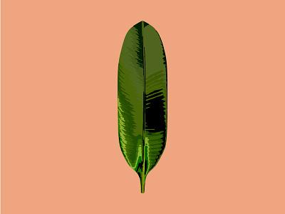 Botanical Illustration 2 botanical illustration tropical foliage leaf palm