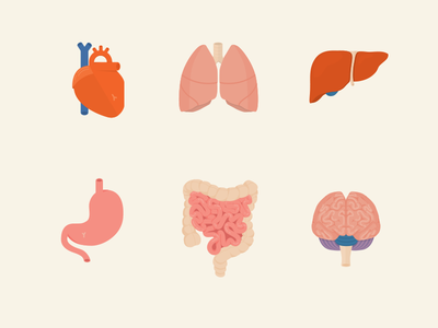 Everybody is squishy & pink gross icon brain intestine stomach liver lungs heart anatomy organs aveeno