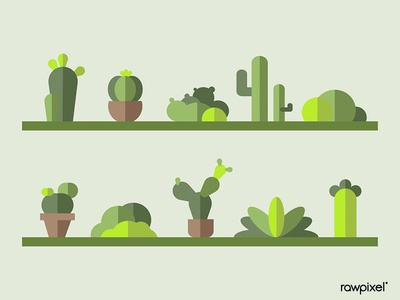 Green botany cactus collection vector