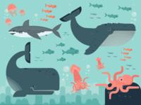 Marine Life Creatures