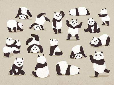 Pandas party animal cute animal pose black  white party celebration humor vector illustration flat illustration