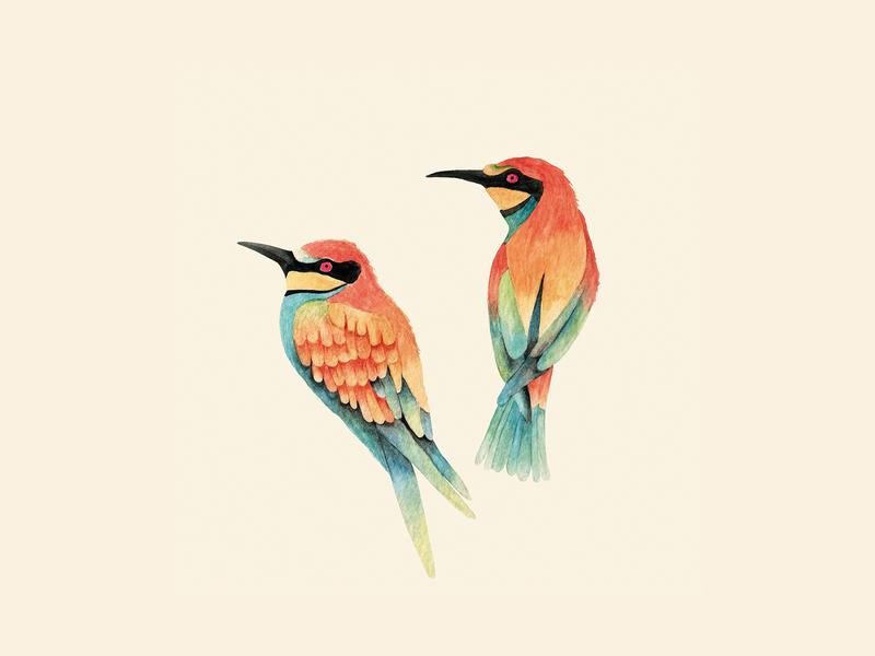 Silvana birds surfacedesigner pattern design painting pattern birds watercolor illustration