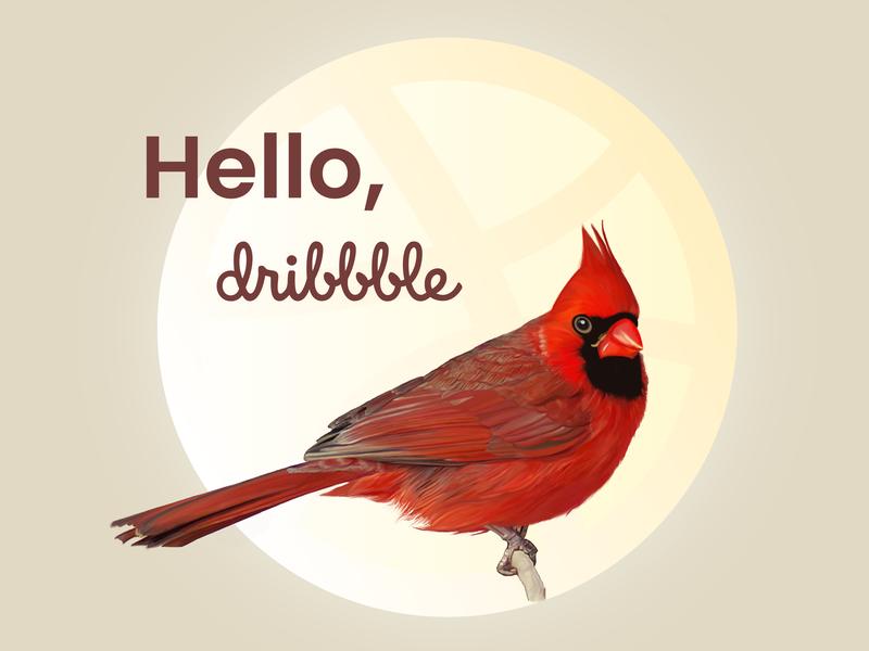 Hello Dribbble! digital art digital state bird ohio procreate brushes procreate art texture nature 2d art 2d ipadpro procreateapp procreate feather art illustration redbird red bird cardinals
